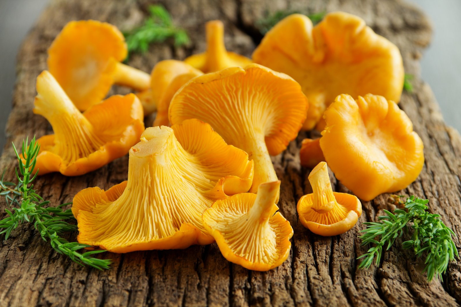 Photos of chanterelle mushrooms 71 best Mushrooms Chanterelles images on Pinterest Fungi