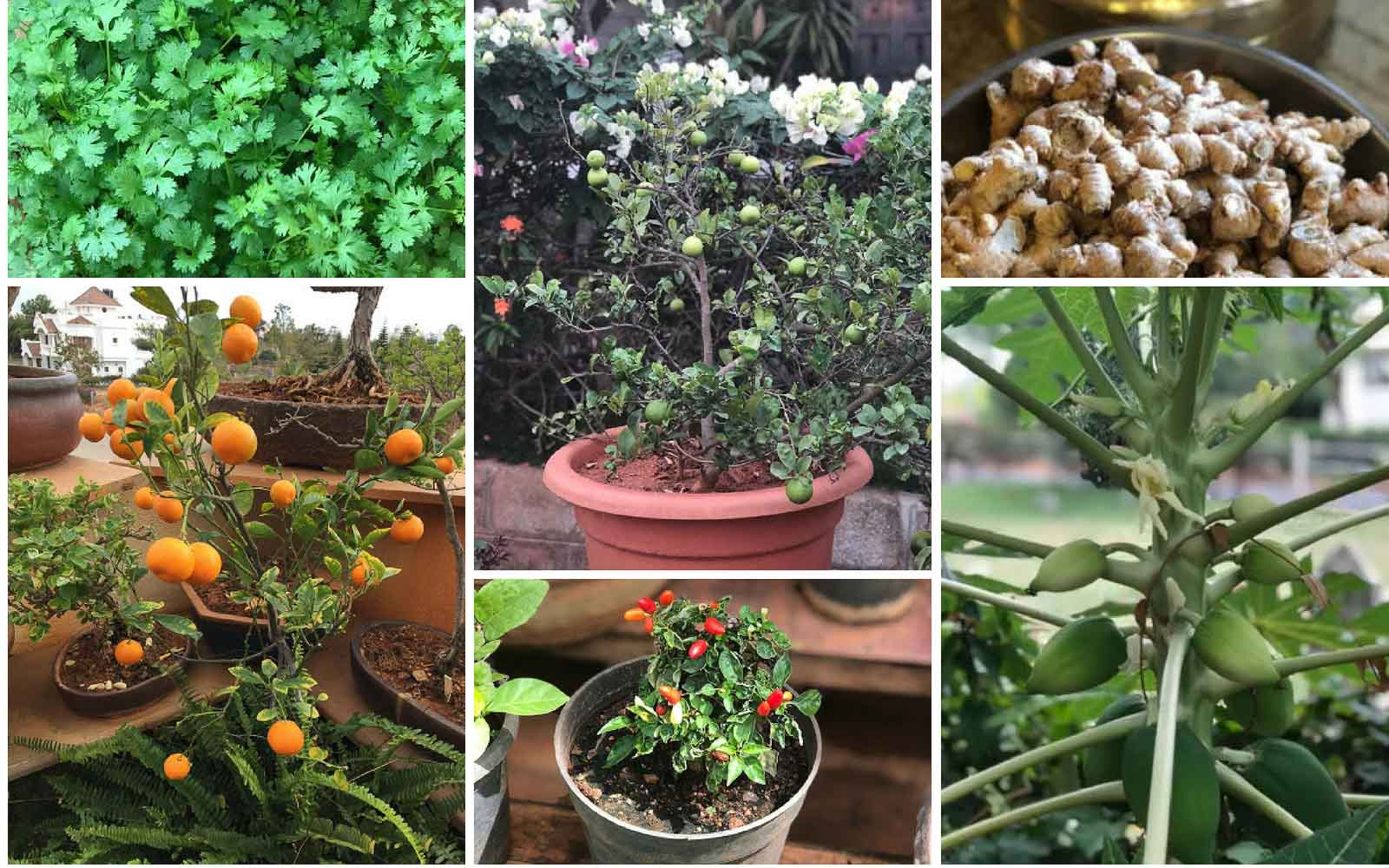 9 Plants That Are Super Easy To Get Your Kitchen Garden Started By Archana S Kitchen