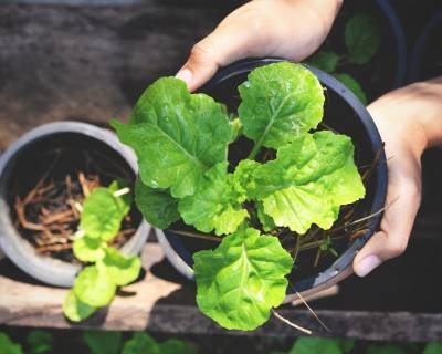 Did You Know About Magical Foods That Can Be Regrown in Your Terrace Garden